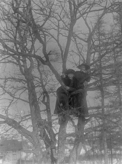 2 stycken finklädda kvinnor med hatt som klättrat upp i ett trä.